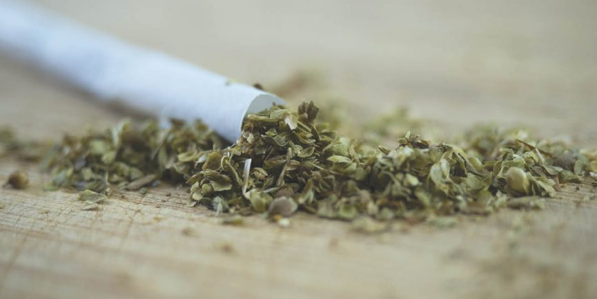 Salvia leaves being rolled into a joint due to a person with an addiction
