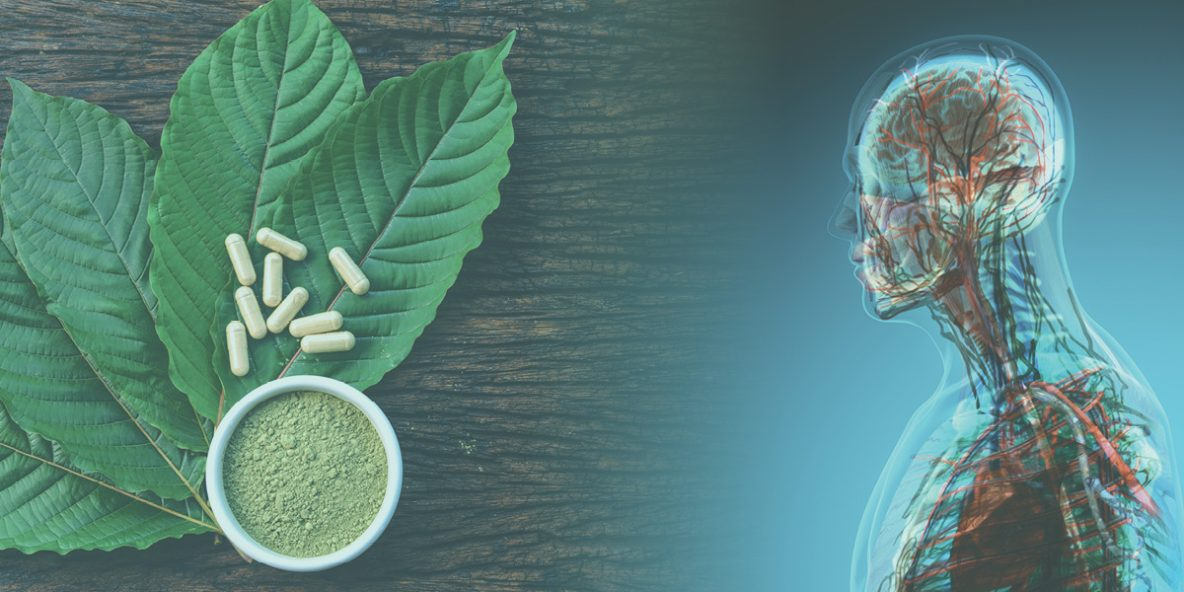 Kratom leaves, pills, and powder next to the human body